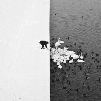 L'effet de contraste